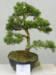 arbre 2.jpg