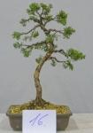 arbre 16.jpg